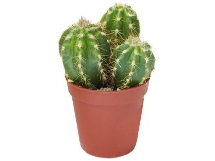 cactus-creations