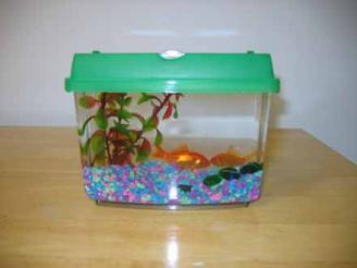 mini-fish-tanks